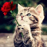 KittySteph