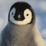 El Penguin Bobo