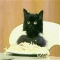 Spaghetti Cat's Photo