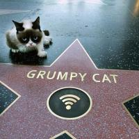 grumpy cat meme's Photo
