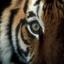 TigerVsLion