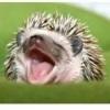 Mercenary_H3dgehog