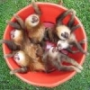 Tomorrow is Friendship Day :P - last post by BucketOfSloths
